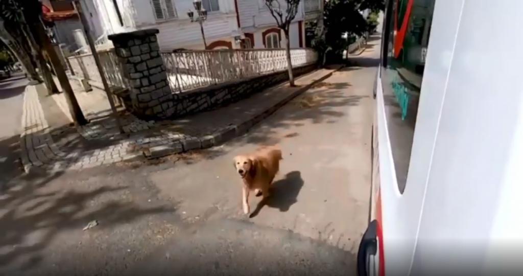 Cachorro persegue ambulância que levava tutora para hospital na Turquia; assista